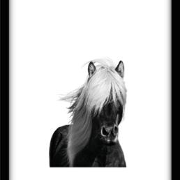 Wilde Horse