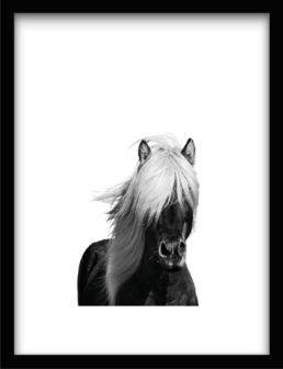 Art Print Wilde Horse