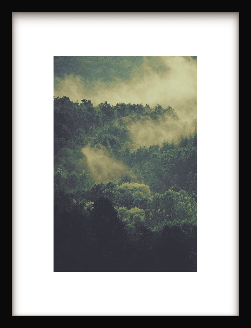 Green Foggy Forest
