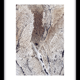 Art Print CURLY SOFT CORAL
