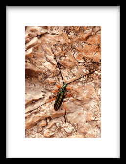 Art Print HIGH ON LIFE INSECT