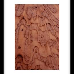 Art Print LAYERED PINK BRAINS