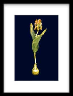 Art Print Orange Gold